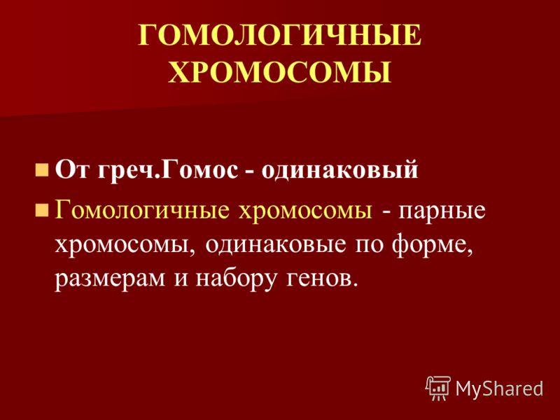 ГОМОЛОГИЧНЫЕ ХРОМОСОМЫ От греч.Гомос - одинаковый Гомологичные хромосомы - парные хромосомы, одинаковые по форме, размерам и набору генов.