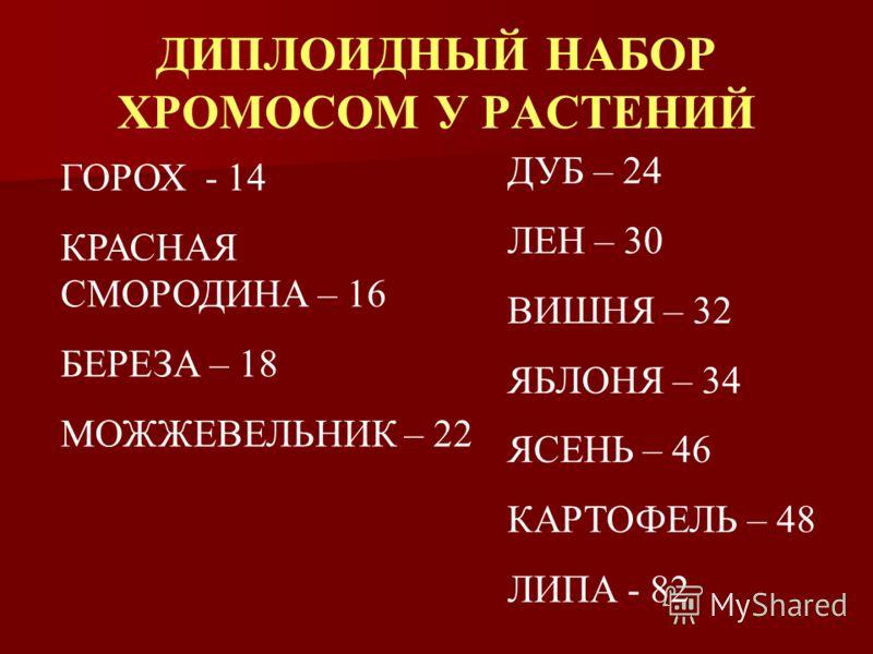 ДИПЛОИДНЫЙ НАБОР ХРОМОСОМ У РАСТЕНИЙ ГОРОХ - 14 КРАСНАЯ СМОРОДИНА – 16 БЕРЕЗА – 18 МОЖЖЕВЕЛЬНИК – 22 ДУБ – 24 ЛЕН – 30 ВИШНЯ – 32 ЯБЛОНЯ – 34 ЯСЕНЬ – 46 КАРТОФЕЛЬ – 48 ЛИПА - 82