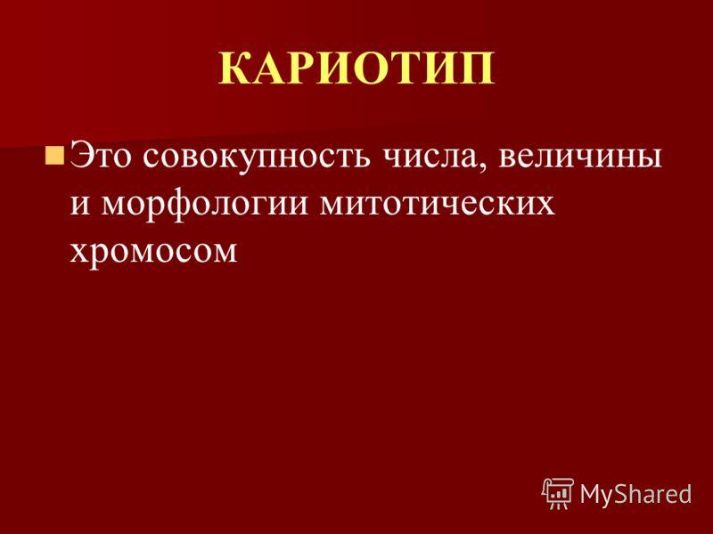 КАРИОТИП Это совокупность числа, величины и морфологии митотических хромосом