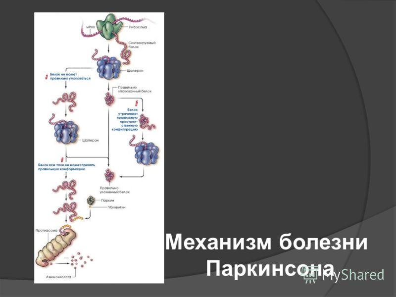 Механизм болезни Паркинсона