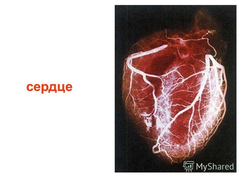 Эритроциты (красные), лейкоциты (белые) и тромбоциты (розовые).