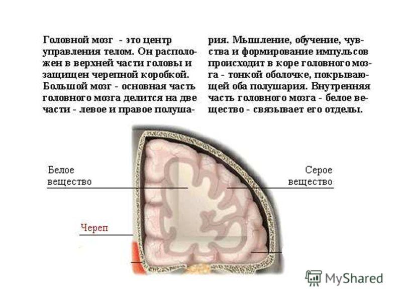 головной мозг Головной мозг. 900igr.net