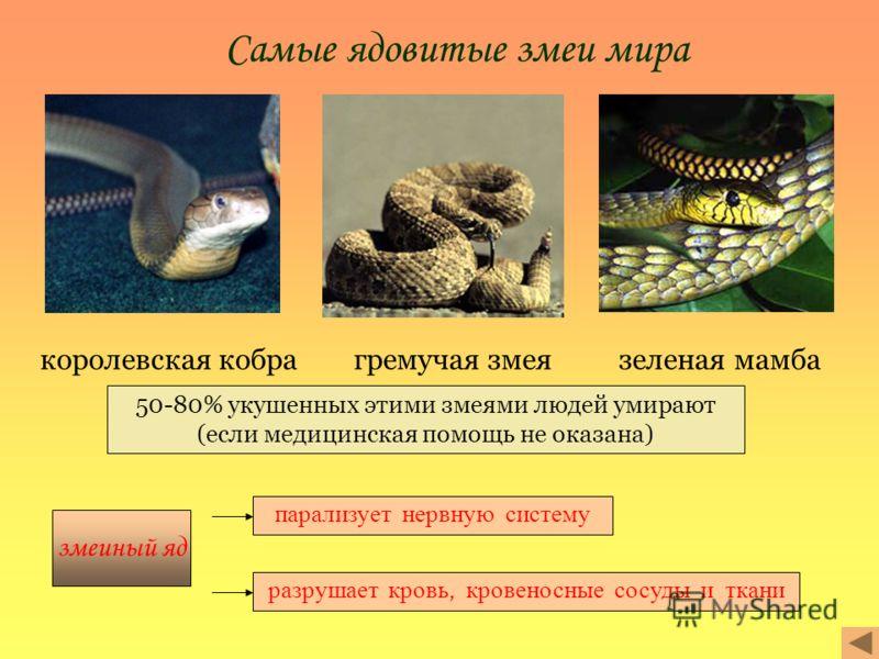 Самые ядовитые змеи мира королевская кобрагремучая змеязеленая мамба 50-80% укушенных этими змеями людей умирают (если медицинская помощь не оказана) змеиный яд парализует нервную систему разрушает кровь, кровеносные сосуды и ткани