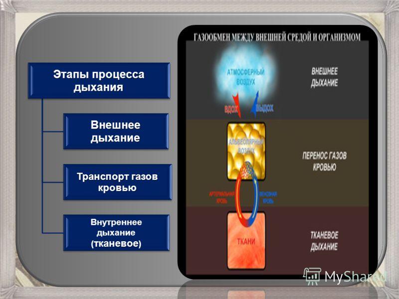 Этапы процесса дыхания Внешнеедыхание Транспорт газов кровью Внутреннее дыхание тканевое ( тканевое )
