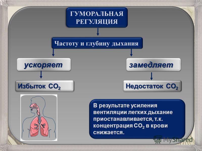 ГУМОРАЛЬНАЯ РЕГУЛЯЦИЯ ГУМОРАЛЬНАЯ РЕГУЛЯЦИЯ Частоту и глубину дыхания ускоряет ускоряет Избыток CO 2 замедляетзамедляет Недостаток CO 2 В результате усиления вентиляции легких дыхание приостанавливается, т.к. концентрация CO 2 в крови снижается.