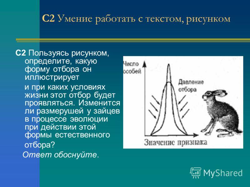 С2 Умение работать с текстом, рисунком С2 Пользуясь рисунком, определите, какую форму отбора он иллюстрирует и при каких условиях жизни этот отбор будет проявляться. Изменится ли размерушей у зайцев в процессе эволюции при действии этой формы естеств