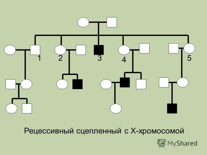 123 4 5 Рецессивный сцепленный с Х-хромосомой