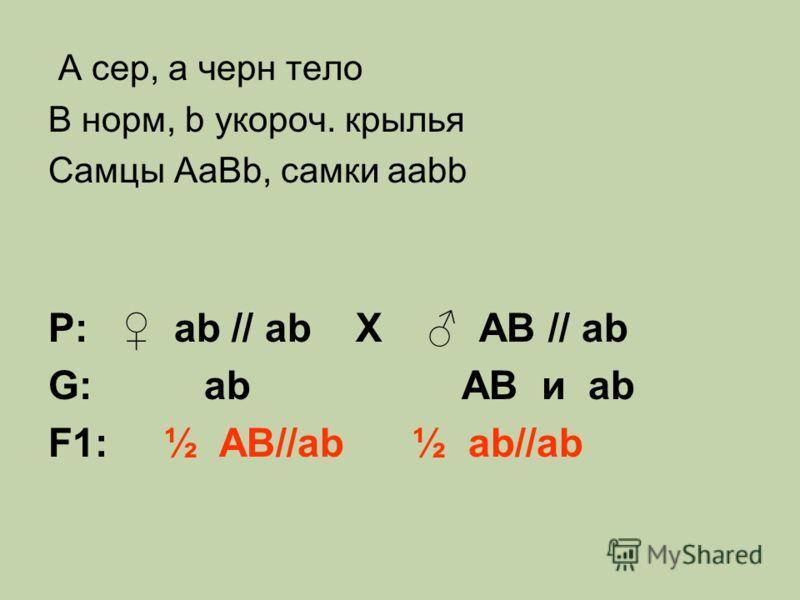 A сер, a черн тело B норм, b укороч. крылья Самцы AaBb, самки aabb Р: ab // ab Х AB // ab G: ab AB и ab F1: ½ AB//ab ½ ab//ab