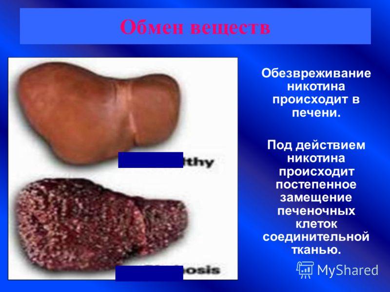 Обмен веществ Обезвреживание никотина происходит в печени. Под действием никотина происходит постепенное замещение печеночных клеток соединительной тканью.