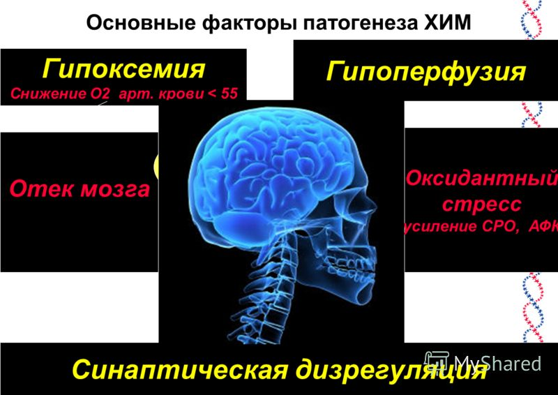 Основные факторы патогенеза ХИМ Гипоксемия Снижение О2 арт. крови < 55 Гипоперфузия Отек мозга Оксидантный стресс (усиление СРО, АФК) Синаптическая дизрегуляция Диффузное и очаговое поражение мозга