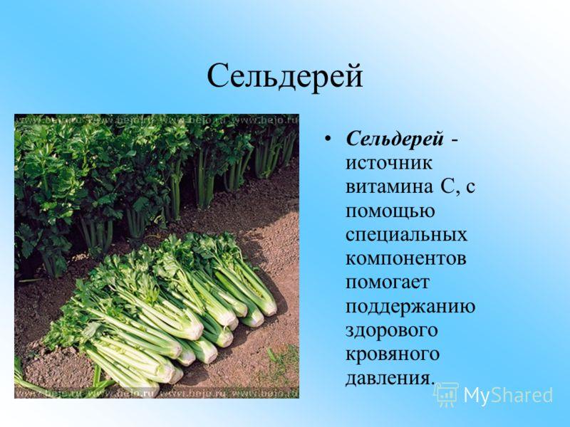 Сельдерей Сельдерей - источник витамина С, с помощью специальных компонентов помогает поддержанию здорового кровяного давления.