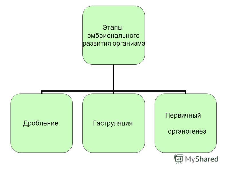 Этапы эмбрионального развития организма ДроблениеГаструляция Первичный органогенез