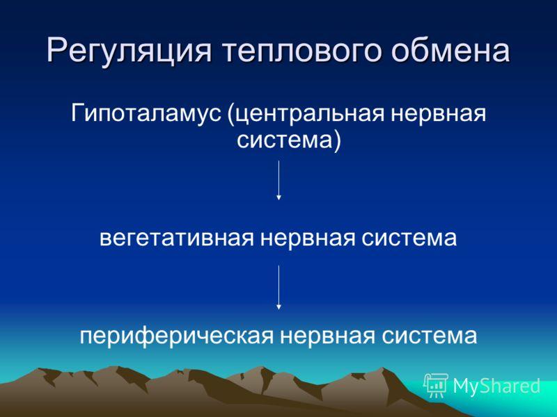 Регуляция теплового обмена Гипоталамус (центральная нервная система) вегетативная нервная система периферическая нервная система