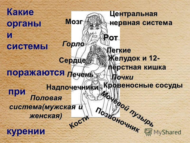 Мозг Горло Сердце Печень Надпочечники Половая система(мужская и женская) Кости Центральная нервная система Рот Легкие Желудок и 12- перстная кишка Почки Кровеносные сосуды Мочевой пузырь Позвоночник курении Какие органы и системы поражаются при