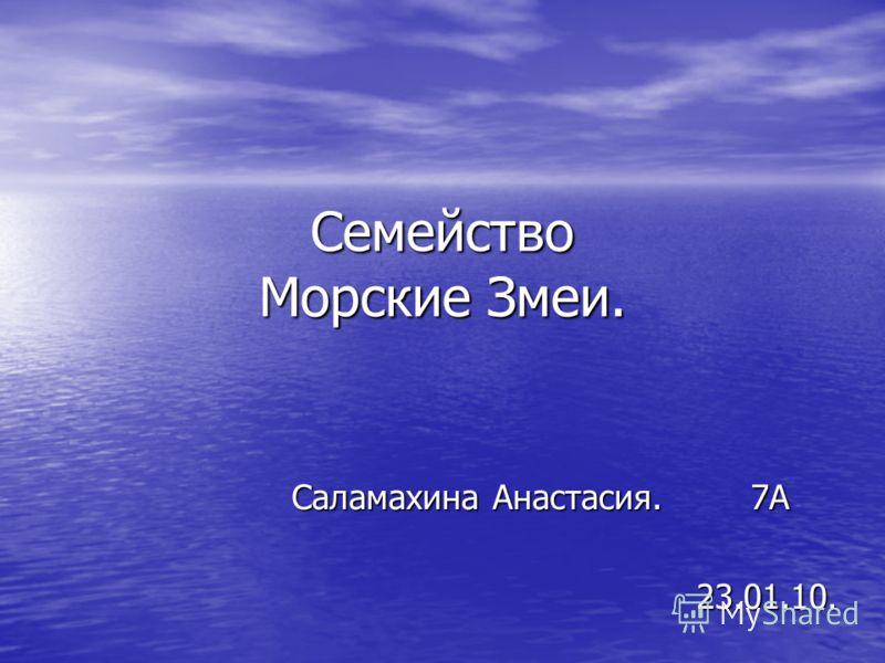 Семейство Морские Змеи. Саламахина Анастасия. 7А 23.01.10. 23.01.10.