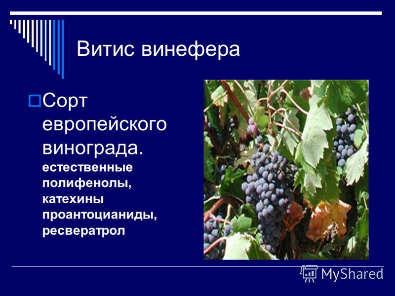 Витис винефера Сорт европейского винограда. естественные полифенолы, катехины проантоцианиды, ресвератрол
