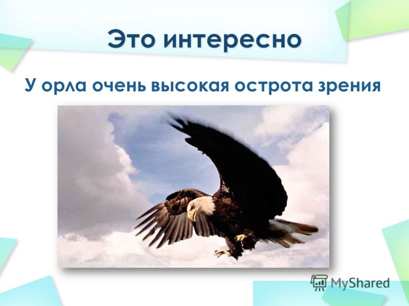 У орла очень высокая острота зрения