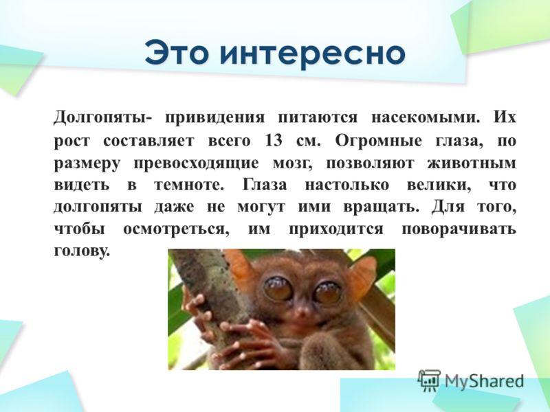 Долгопяты- привидения питаются насекомыми. Их рост составляет всего 13 см. Огромные глаза, по размеру превосходящие мозг, позволяют животным видеть в темноте. Глаза настолько велики, что долгопяты даже не могут ими вращать. Для того, чтобы осмотретьс