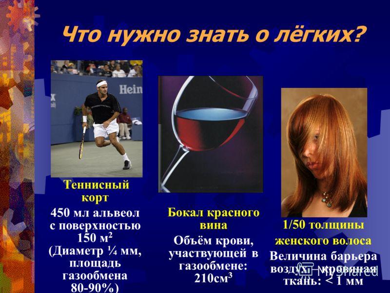 Что нужно знать о лёгких? Теннисный корт 450 мл альвеол с поверхностью 150 м 2 (Диаметр ¼ мм, площадь газообмена 80-90%) Бокал красного вина Объём крови, участвующей в газообмене: 210см 3 1/50 толщины женского волоса Величина барьера воздух – кровяна