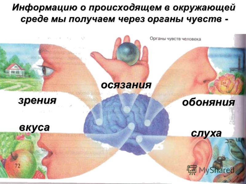 Информацию о происходящем в окружающей среде мы получаем через органы чувств - зрения осязания обоняния вкуса слуха