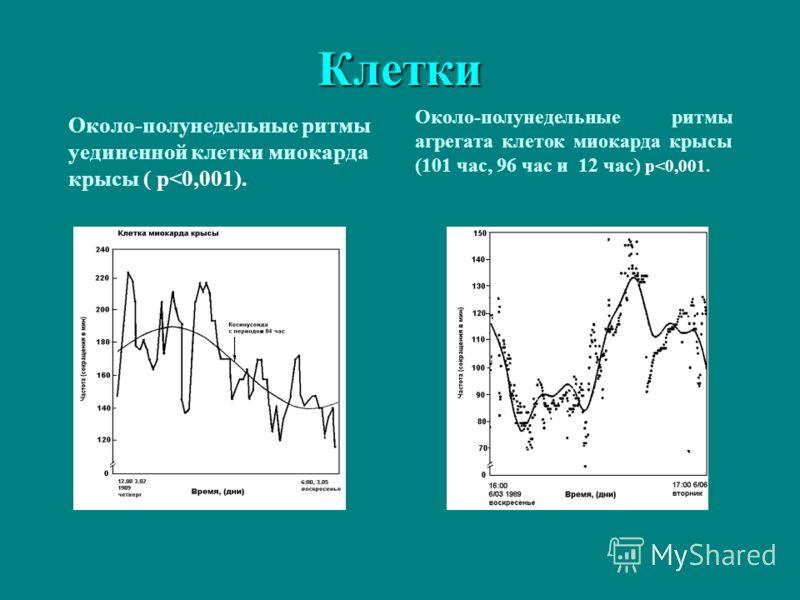 Клетки Около-полунедельные ритмы уединенной клетки миокарда крысы ( p