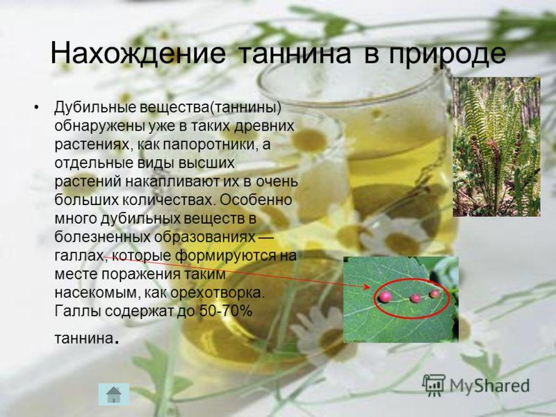 Нахождение таннина в природе Дубильные вещества(таннины) обнаружены уже в таких древних растениях, как папоротники, а отдельные виды высших растений накапливают их в очень больших количествах. Особенно много дубильных веществ в болезненных образовани