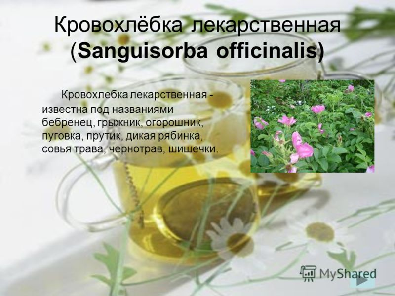 Кровохлёбка лекарственная (Sanguisorba officinalis) Кровохлебка лекарственная - известна под названиями бебренец, грыжник, огорошник, пуговка, прутик, дикая рябинка, совья трава, чернотрав, шишечки.