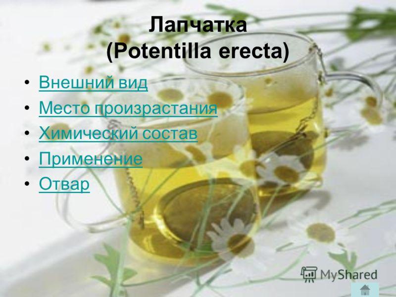 Лапчатка (Potentilla erecta) Внешний вид Место произрастания Химический состав Применение Отвар