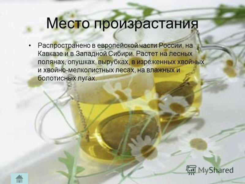 Место произрастания Распространено в европейской части России, на Кавказе и в Западной Сибири. Растет на лесных полянах, опушках, вырубках, в изреженных хвойных и хвойно-мелколистных лесах, на влажных и болотисных лугах.