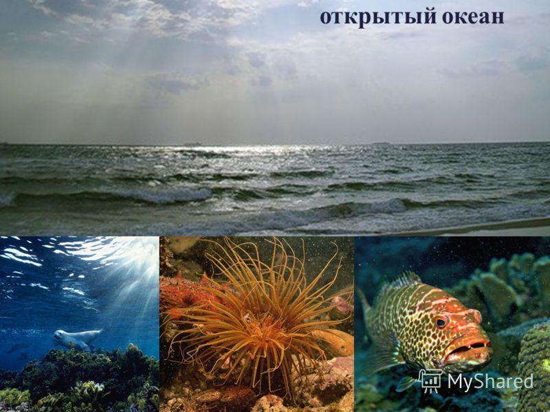 открытый океан