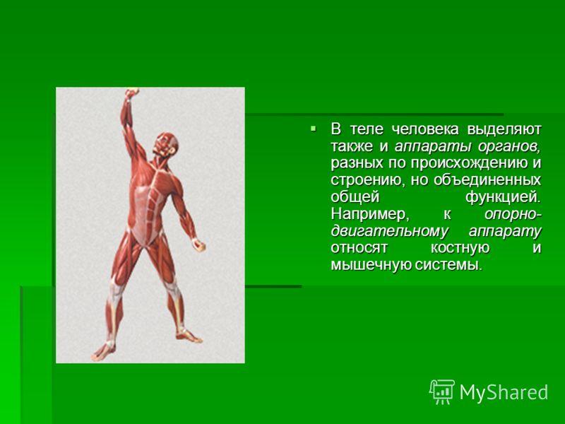 В теле человека выделяют также и аппараты органов, разных по происхождению и строению, но объединенных общей функцией. Например, к опорно- двигательному аппарату относят костную и мышечную системы. В теле человека выделяют также и аппараты органов, р