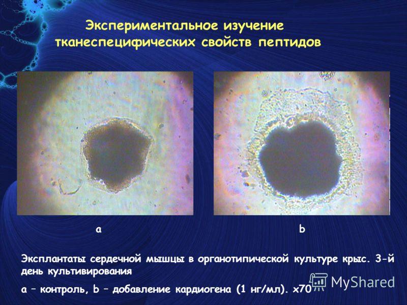 Эксплантаты сердечной мышцы в органотипической культуре крыс. 3-й день культивирования a – контроль, b – добавление кардиогена (1 нг/мл). x70 ab Экспериментальное изучение тканеспецифических свойств пептидов