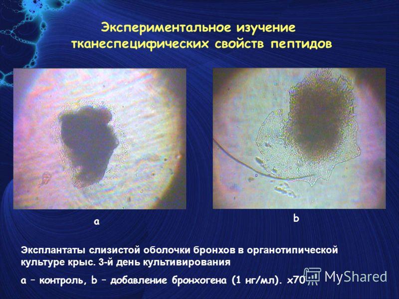 Эксплантаты слизистой оболочки бронхов в органотипической культуре крыс. 3-й день культивирования a – контроль, b – добавление бронхогена (1 нг/мл). x70 a b Экспериментальное изучение тканеспецифических свойств пептидов