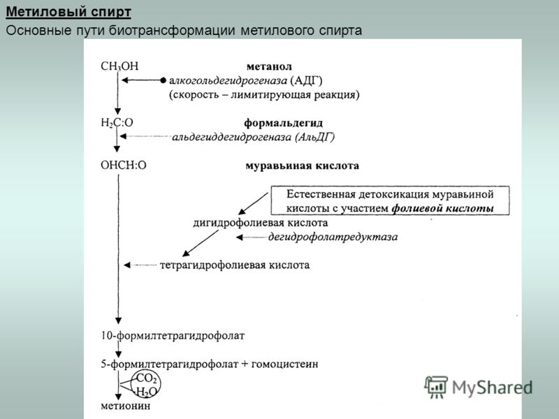 Метиловый спирт Основные пути биотрансформации метилового спирта