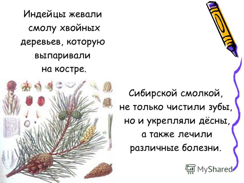 Индейцы жевали смолу хвойных деревьев, которую выпаривали на костре. Сибирской смолкой, не только чистили зубы, но и укрепляли дёсны, а также лечили различные болезни.