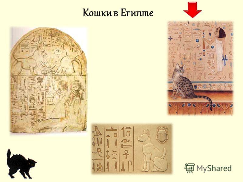 Кошки в религии Кошки в Египте Кошки в буддизме Кошки в христианстве