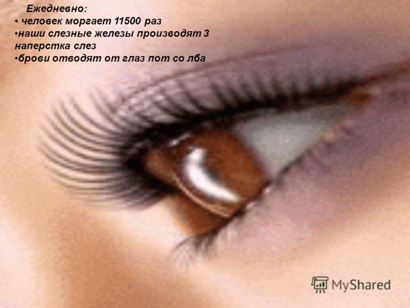 Ежедневно: человек моргает 11500 раз наши слезные железы производят 3 наперстка слез брови отводят от глаз пот со лба