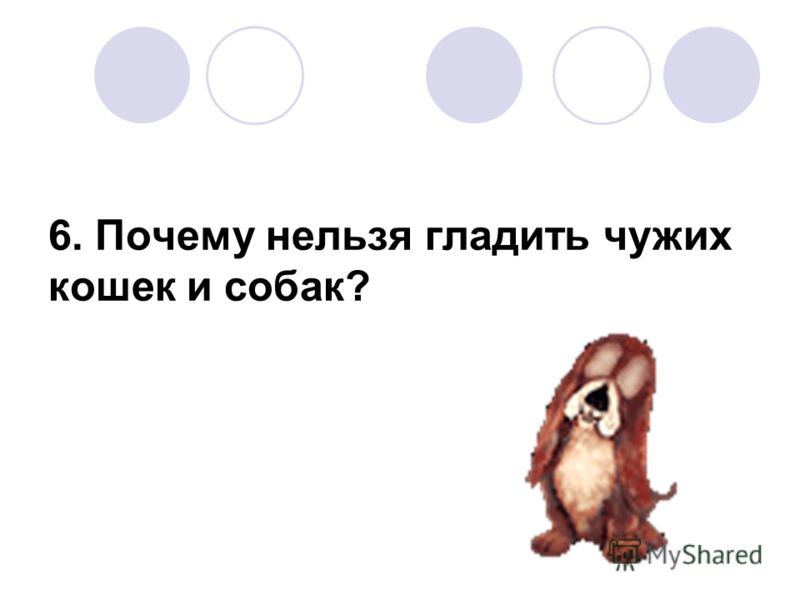 6. Почему нельзя гладить чужих кошек и собак?