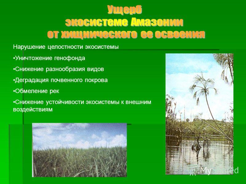 Нарушение целостности экосистемы Уничтожение генофонда Снижение разнообразия видов Деградация почвенного покрова Обмеление рек Снижение устойчивости экосистемы к внешним воздействиям