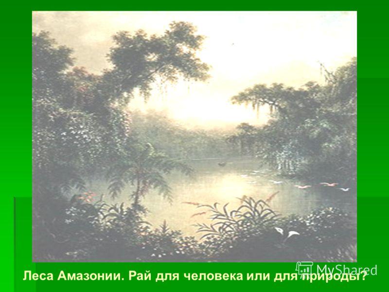 Леса Амазонии. Рай для человека или для природы?