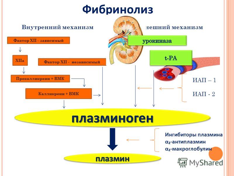 плазминогенплазминоген плазминплазмин Фактор XII - зависимый Фактор XII - независимый Прекалликреин + ВМК Калликреин + ВМК XIIa Внутренний механизмВнешний механизм ИАП – 1 ИАП - 2 Ингибиторы плазмина α-антиплазмин α-макроглобулин Фибринолиз