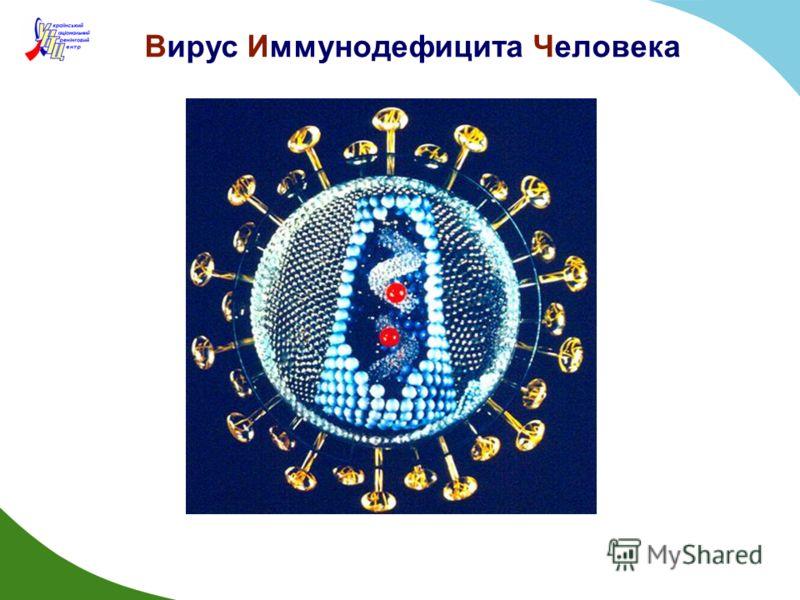 Вирус Иммунодефицита Человека