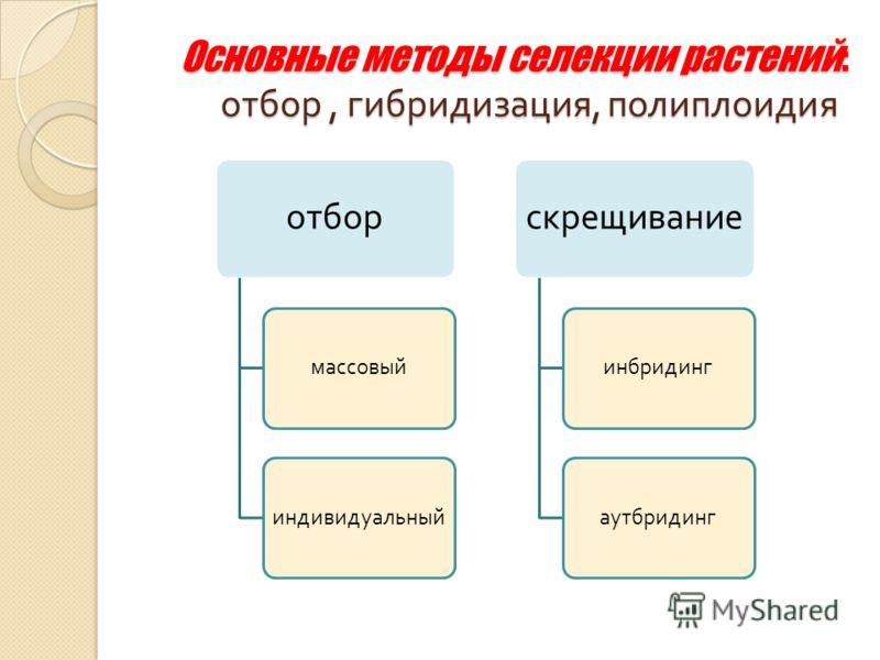 Основные методы селекции растений: отбор, гибридизация, полиплоидия отбор массовыйиндивидуальный скрещивание инбридингаутбридинг