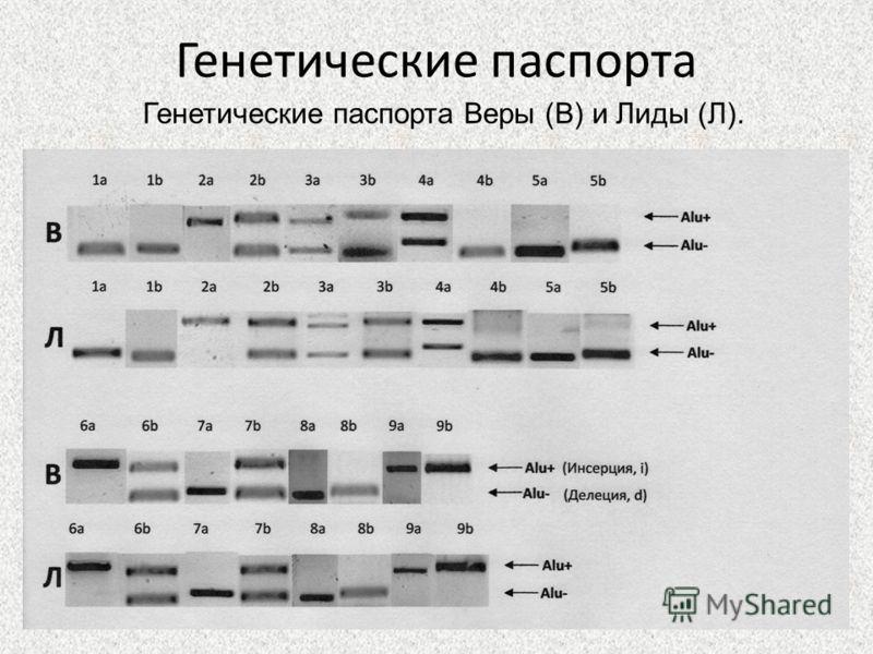 Генетические паспорта Генетические паспорта Веры (В) и Лиды (Л).