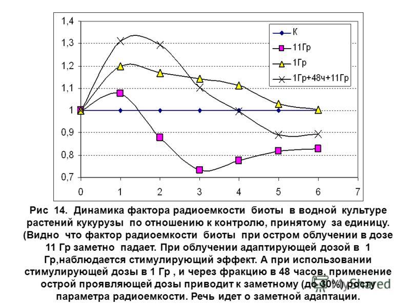 Рис 14. Динамика фактора радиоемкости биоты в водной культуре растений кукурузы по отношению к контролю, принятому за единицу. (Видно что фактор радиоемкости биоты при остром облучении в дозе 11 Гр заметно падает. При облучении адаптирующей дозой в 1