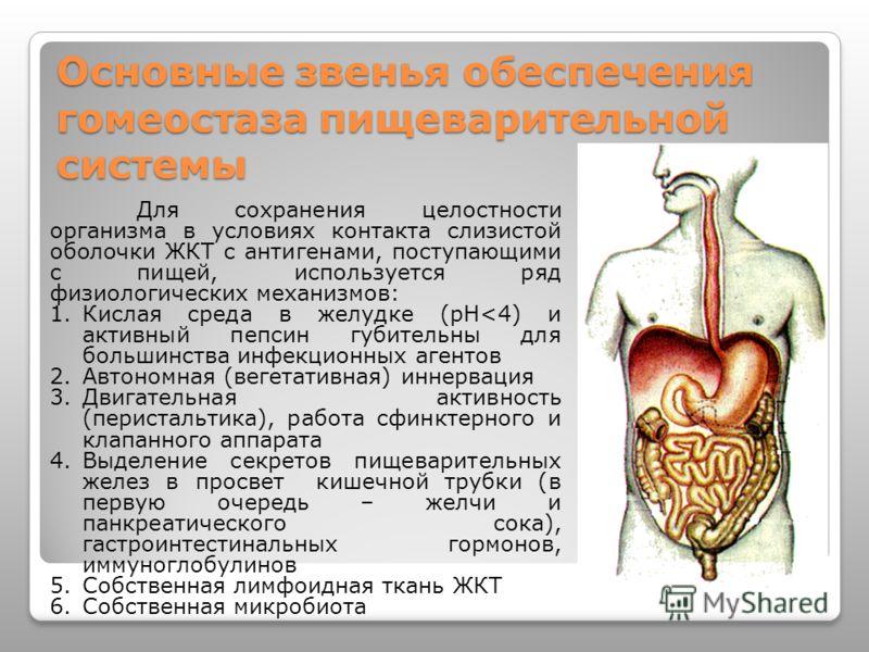 Основные звенья обеспечения гомеостаза пищеварительной системы Для сохранения целостности организма в условиях контакта слизистой оболочки ЖКТ с антигенами, поступающими с пищей, используется ряд физиологических механизмов: 1.Кислая среда в желудке (
