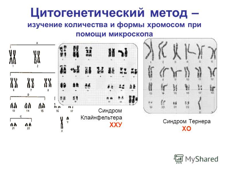 Цитогенетический метод – изучение количества и формы хромосом при помощи микроскопа Синдром Клайнфельтера ХХУ Синдром Тернера ХO
