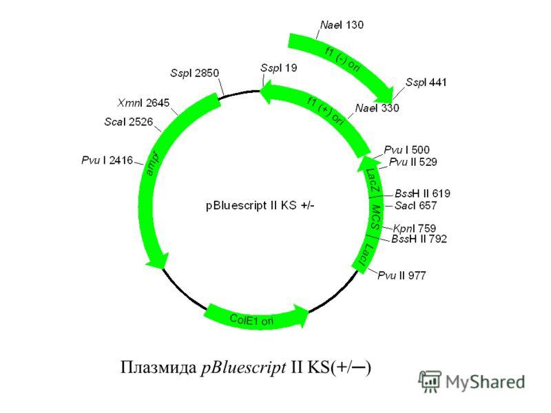 Плазмида pBluescript II KS(+/)