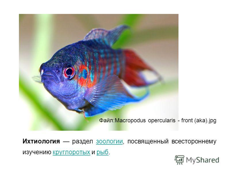 Ихтиология раздел зоологии, посвященный всестороннему изучению круглоротых и рыб.зоологиикруглоротыхрыб Файл:Macropodus opercularis - front (aka).jpg