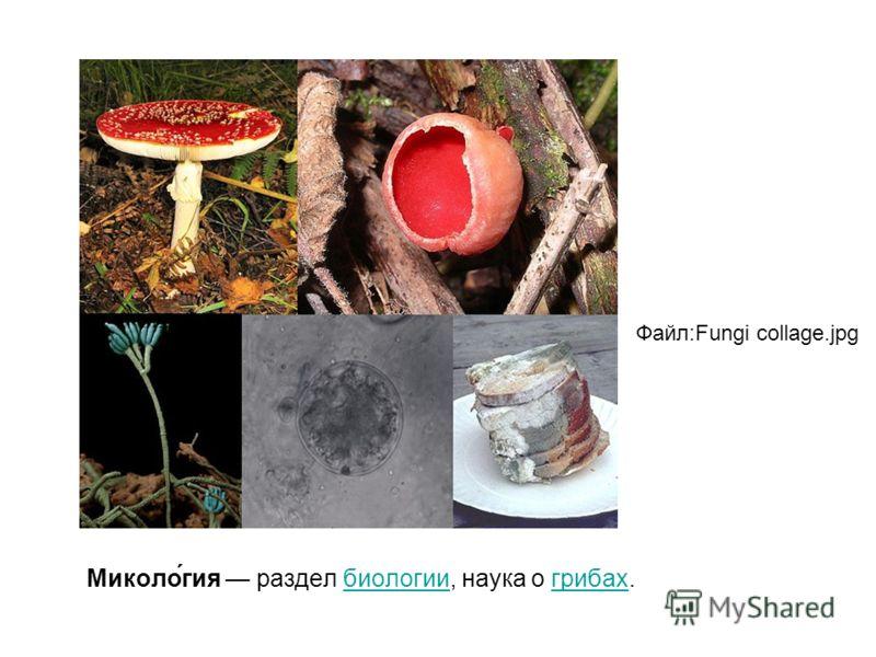 Миколо́гия раздел биологии, наука о грибах.биологиигрибах Файл:Fungi collage.jpg
